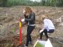 Špoģu vidusskolas skolēni stāda priežu mežu